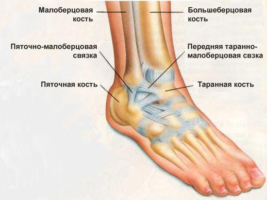 Изображение - Деформирующий остеоартроз голеностопного сустава 2 степени лечение chto-takoe-deformiruyushhij-osteoartroz-golenostopnogo-sustava