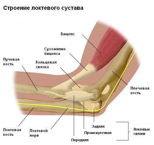 Воспаление сухожилий локтевого сустава виды