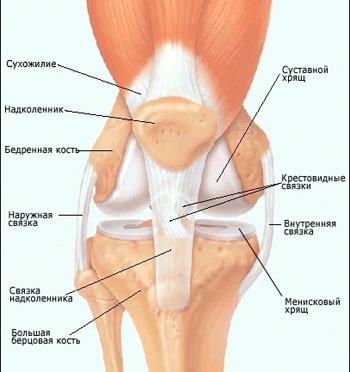 Воспаление сухожилий коленного сустава группа риска и виды