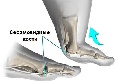 Сесамовидные кости коленного сустава