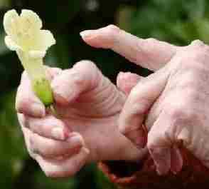 лечение реактивного артрита народными средствами